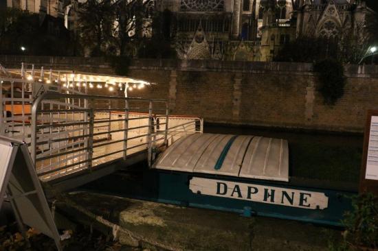 Daphne1 img 8462
